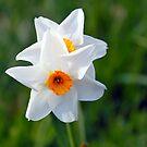 Spring flowers of Versailles by blindskunk