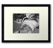 Fur Pillow Framed Print
