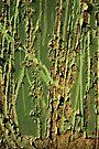 Sugar Cane Field by AuntDot
