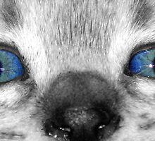 Cat Eyes by Sandra Moore