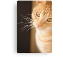 The little kitten looks up to the big lion, with eyes wide open. Canvas Print