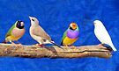 Finches are fun!  by Elizabeth Kendall