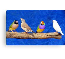 Finches are fun!  Canvas Print