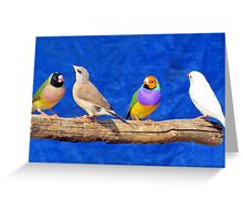 Finches are fun!  Greeting Card