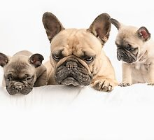 Frenchie Family by Andrew Bret Wallis