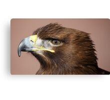 White-tailed Sea Eagle Canvas Print
