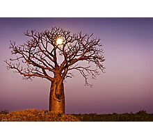 Twilight Moonlight Photographic Print