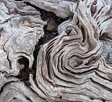 Natural Carvings in Australian Native Box-one by DianneLac