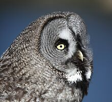 Great Grey Owl by Maria Gaellman