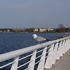 A Gull on the Bay by Steffikins