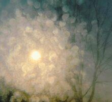 winter star.. by JOSEPHMAZZUCCO