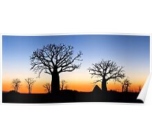 Boab Silhouettes (Panorama) Poster