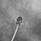 Simplicity by Maria Ismanah Schulze-Vorberg
