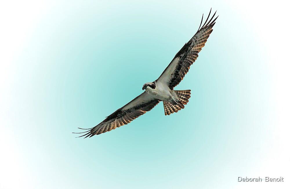 Osprey Soar 2 by Deborah  Benoit