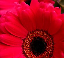 Bright Red by Craig Fletcher