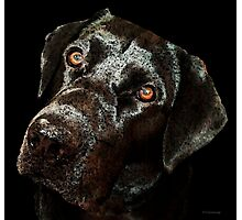 Black Labrador Retriever Dog Art - Dark Chocolate Photographic Print