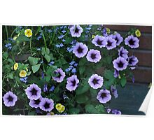 Purple Petunia Glory Poster