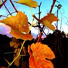 Autumn Vines by Natasha M