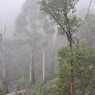 Blue Mountains NSW Australia - Foggy Landscape by Bev Woodman