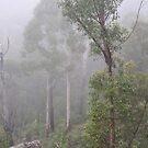 Blue Mountains NSW Australia - Foggy Landscape by Bev Woodman