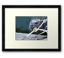 Wild Seal Feeding in the Bay Framed Print