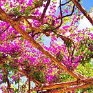 Positano's Purple Bougainvillaes Trellis by daphsam