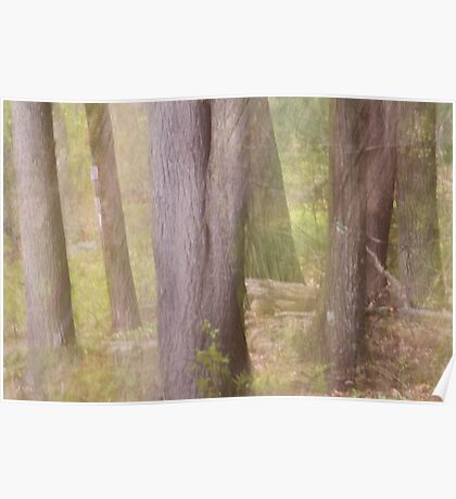 Ghostly Spring Forest Poster