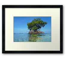 Islet of mangrove with blue sky Framed Print