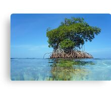 Islet of mangrove with blue sky Canvas Print
