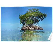 Islet of mangrove with blue sky Poster