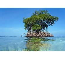 Islet of mangrove with blue sky Photographic Print