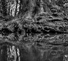 Root by Nigel Bangert