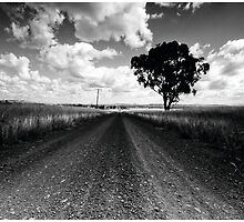 OLD ROAD by Peter Hitchener
