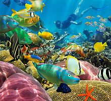 Man underwater coral reef and tropical fish by Dam - www.seaphotoart.com
