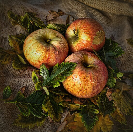 Three Apples by Barb Leopold