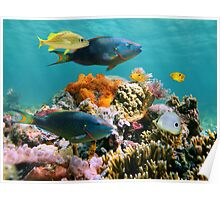 Colorful tropical fish and marine life underwater Poster