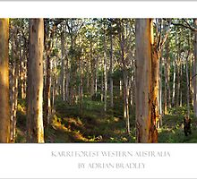 Karri Forest Trees  by nudibranches