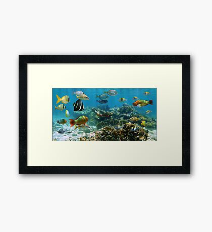 Panorama in a coral reef with colorful tropical fish Framed Print