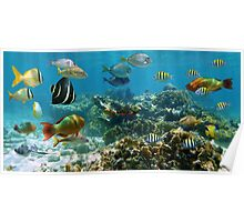 Panorama in a coral reef with colorful tropical fish Poster