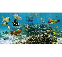Panorama in a coral reef with colorful tropical fish Photographic Print