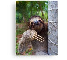 Portrait of Brown-Throated sloth on a tree Canvas Print