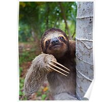 Portrait of Brown-Throated sloth on a tree Poster