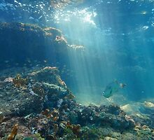 Rays of light underwater on a reef with fish by Dam - www.seaphotoart.com