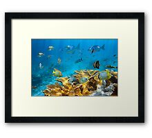 Reef with fish and Elkhorn coral Framed Print