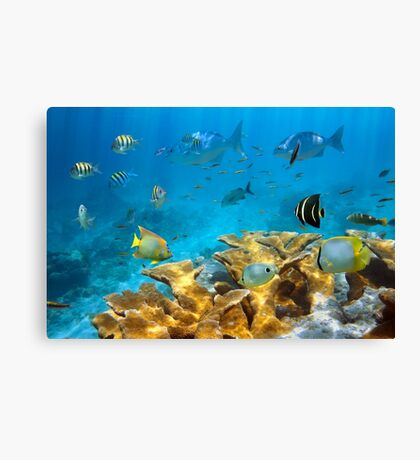 Reef with fish and Elkhorn coral Canvas Print