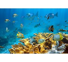 Reef with fish and Elkhorn coral Photographic Print