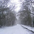 Woods in the winter. by Livvy Young