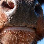 Whose Nose by WellgateFarm