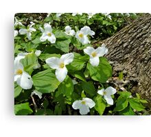 Our Official Flower Canvas Print