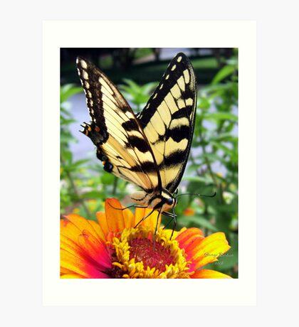 Butterfly Breakfast Art Print